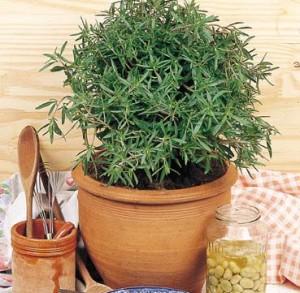 Puterea vindecatoare a plantelor (II)