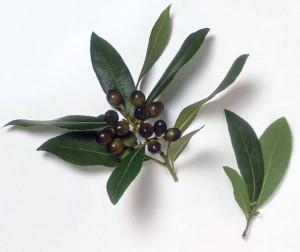 Puterea vindecatoare a plantelor (III)