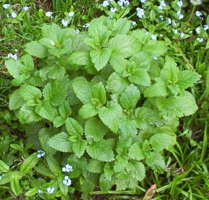 Plante care indeparteaza stresul