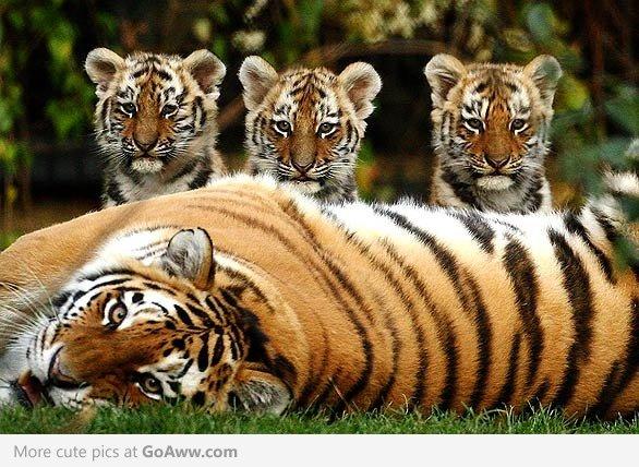 Imagini dragute cu animale