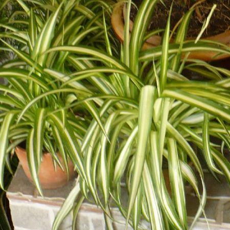Plantele de interior si sanatatea