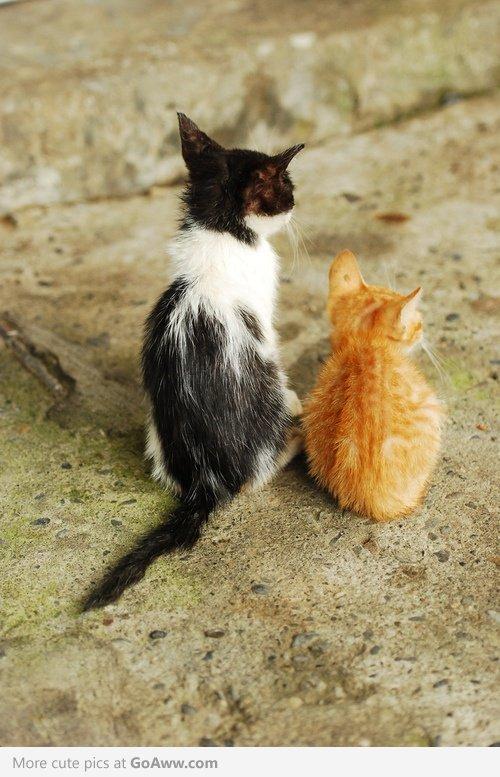 Animalele, mereu surprinzatoare