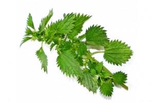 Puterea vindecatoare a plantelor (IV)