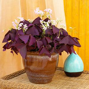 Cele mai frumoase plante de apartament
