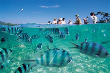 Insulele Fiji, un paradis tropical