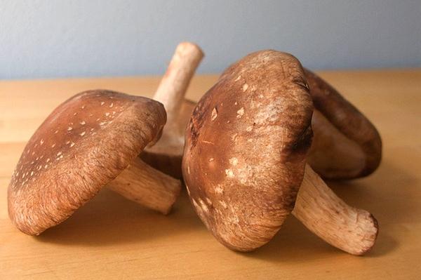 Ciupercile, cea mai buna alegere pentru sanatate