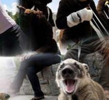 Ce se intampla cand animalele se poarta ca oamenii