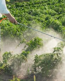 Ce trebuie sa stim despre pesticide