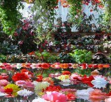 Cele mai frumoase gradini botanice din SUA