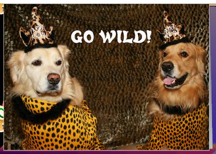 Felicitari haioase cu animale