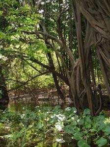 Sejur in jungla braziliana